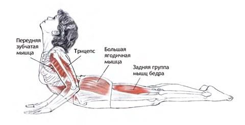 Задействованные мышцы при выполнении асаны в приподнятом положении