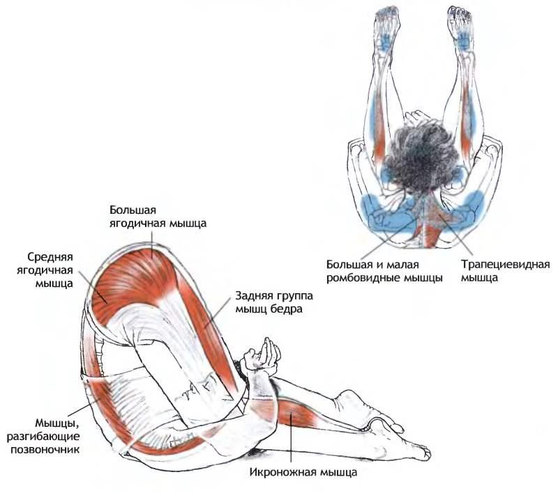 Мышцы, задействованные при выполнение карнапиндасаны