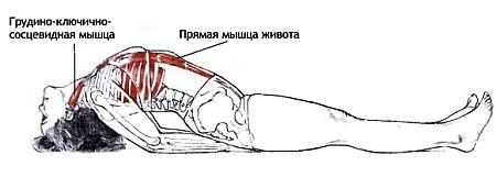 Анатомия матсиасаны