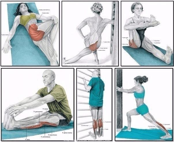Виды растяжки мышц