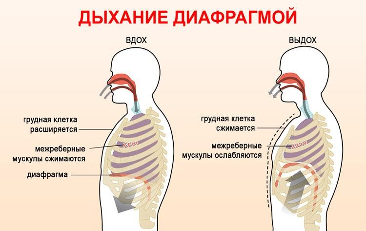 Диафрагменное дыхание - расширение легких