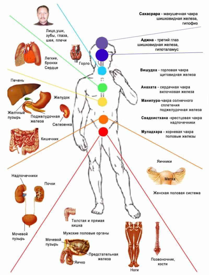 Влияние чакр на работу отдельных органов организма