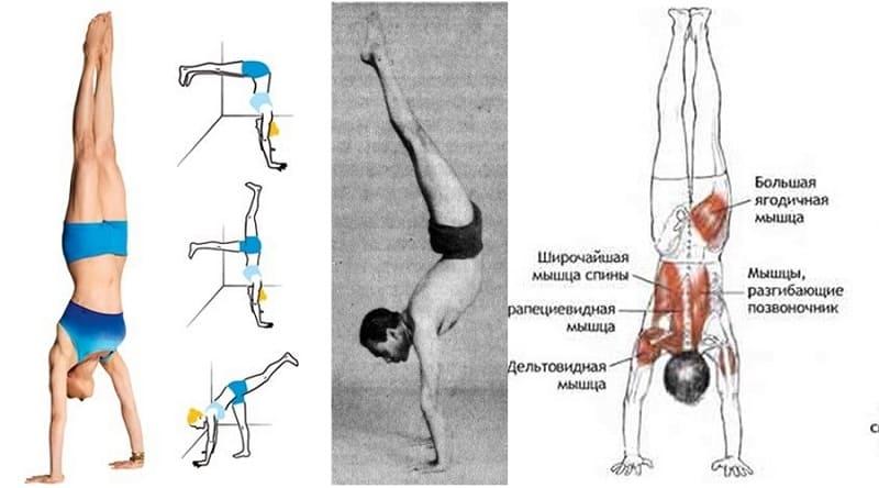 Мышцы, напрягающиеся при стойке на руках