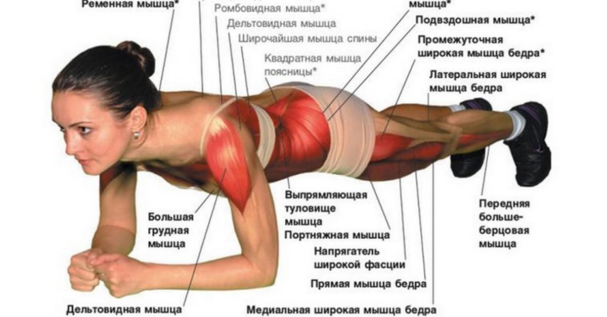 Схема работы мышц при стойке на локтях