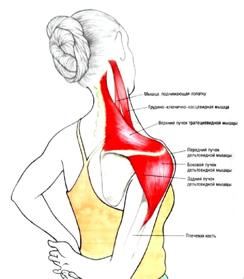 Пример упражнения на растяжку плеч