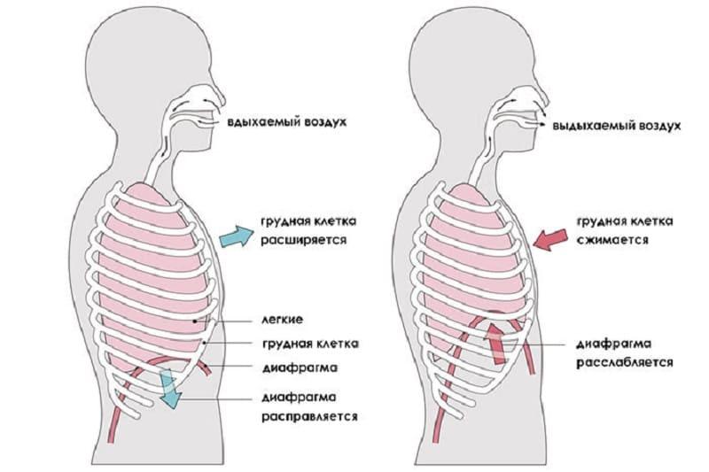 Упражнение на тренировку диафрагмы