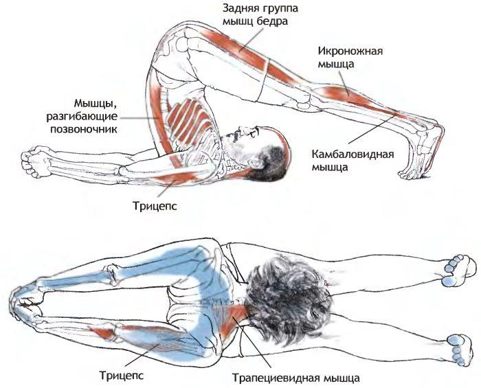 Работа мышц при выполнении позы