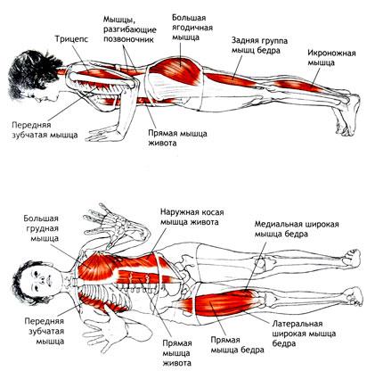 Анатомия чатуранга дандасаны