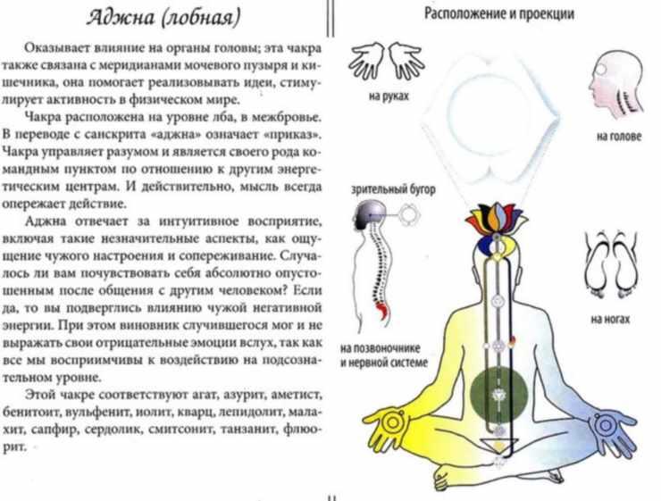 Проекция Аджна чакры на органы человека