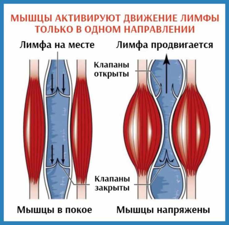 Фото напряженной мышцы