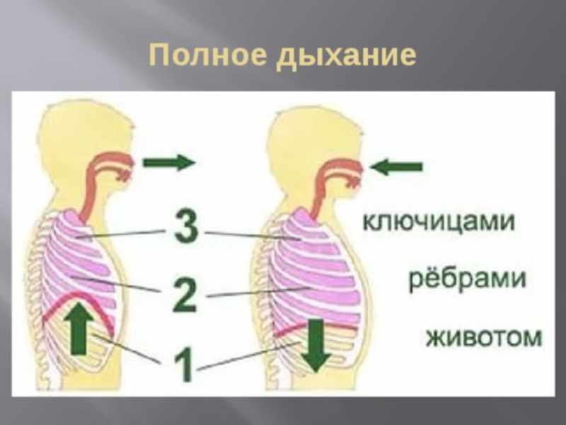 Основные виды йоговского дыхания