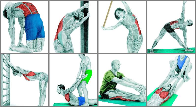 Пример комплексной растяжки спины