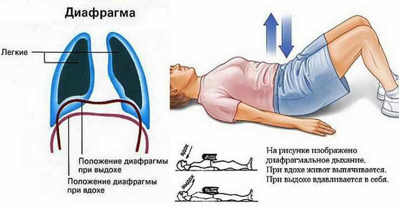Изображение процесса дыхания диафрагмой