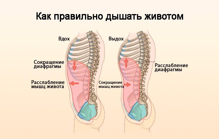 Правильный процесс дыхания животом