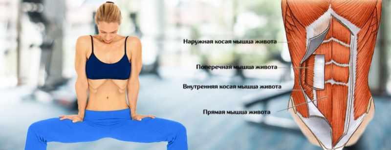 Основы дыхания животом