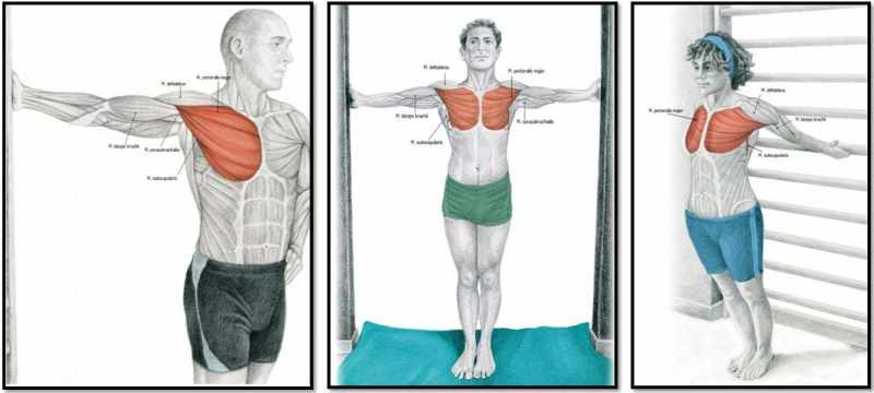 Растяжка мышц груди после силовой тренировки