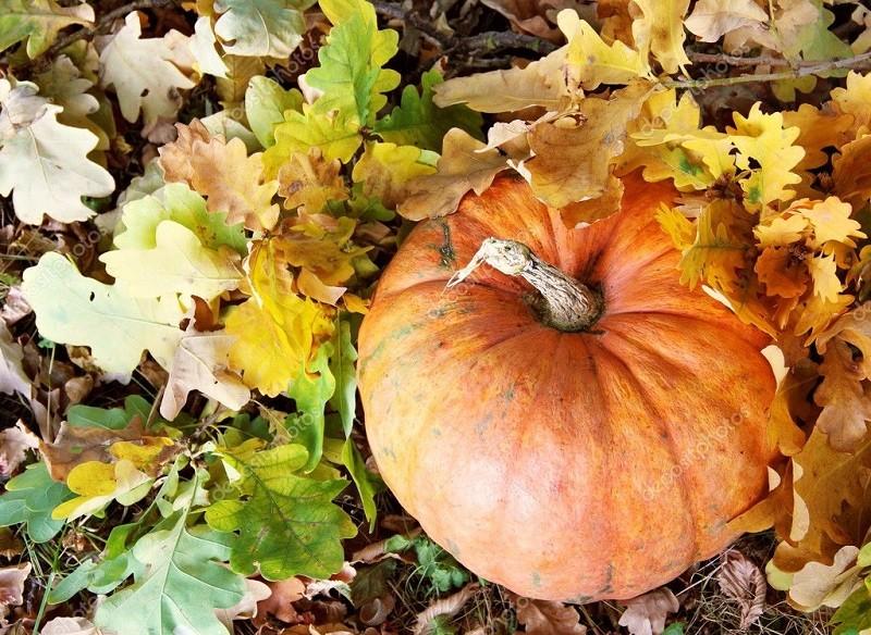 Тыквы и осенние листья-отличная гамма для релаксации