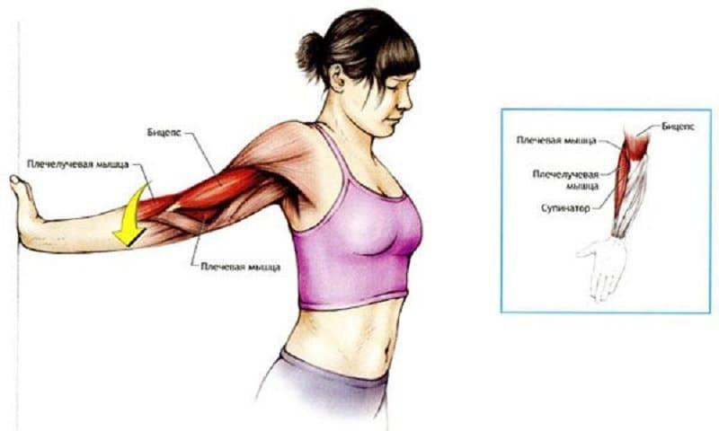 Упражнения для растяжки бицепса