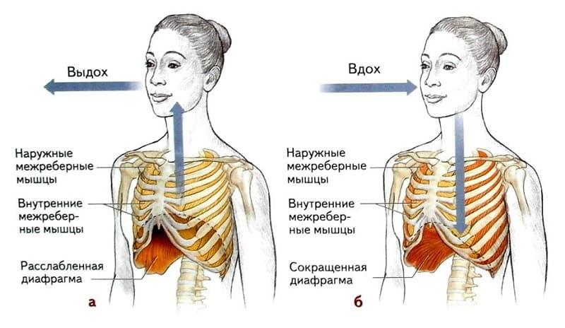 Схема правильного дыхания