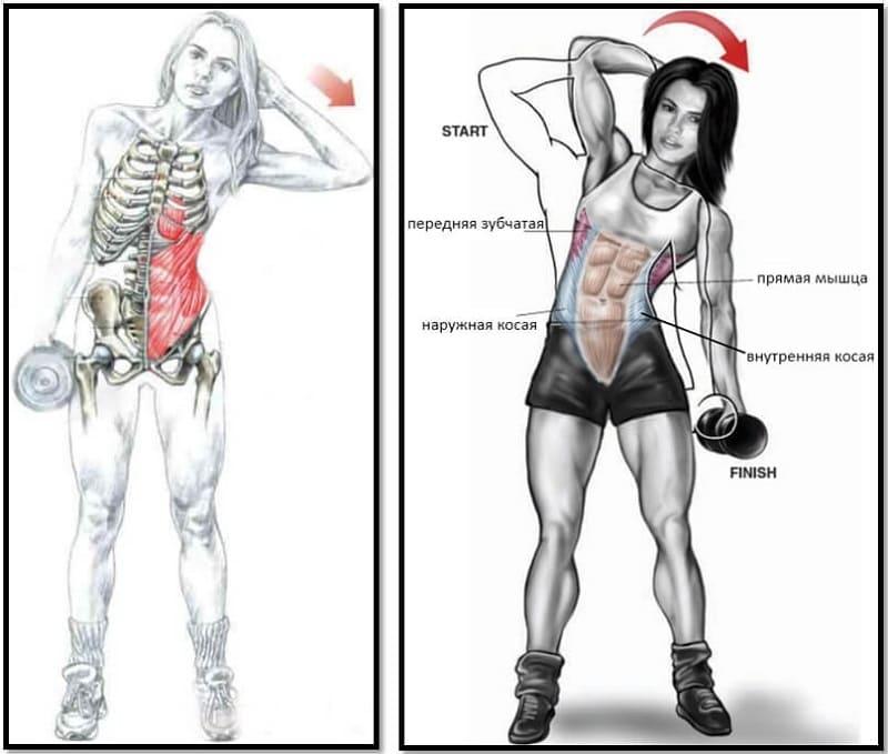 Наклоны в стороны - какие мышцы участвуют