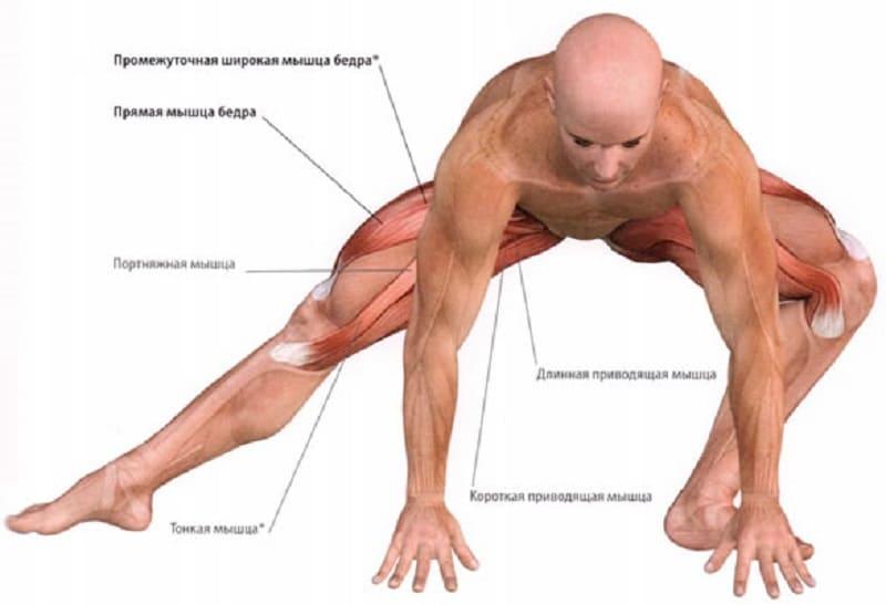 Воздействие растяжения на мышцы бедра