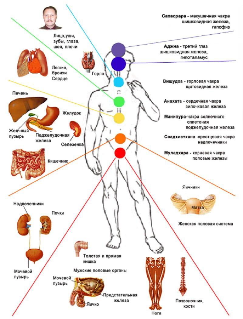 Взаимосвязь чакр человека и систем органов